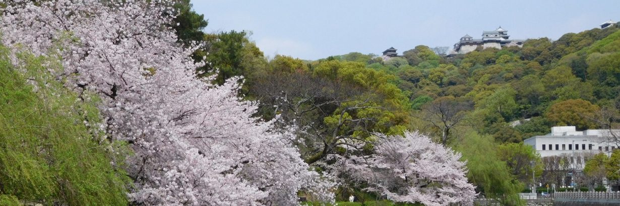 バリアフリー松山